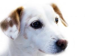 pixabay_dog-72333